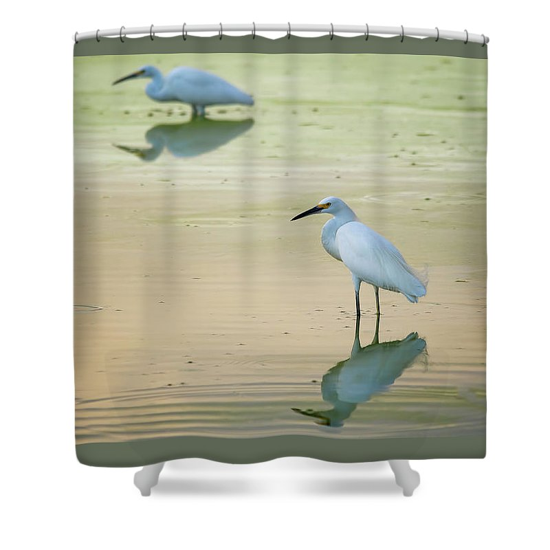 Snowy Egrets Shower Curtain featuring the photograph Snowy Egret Reflections by Saija Lehtonen