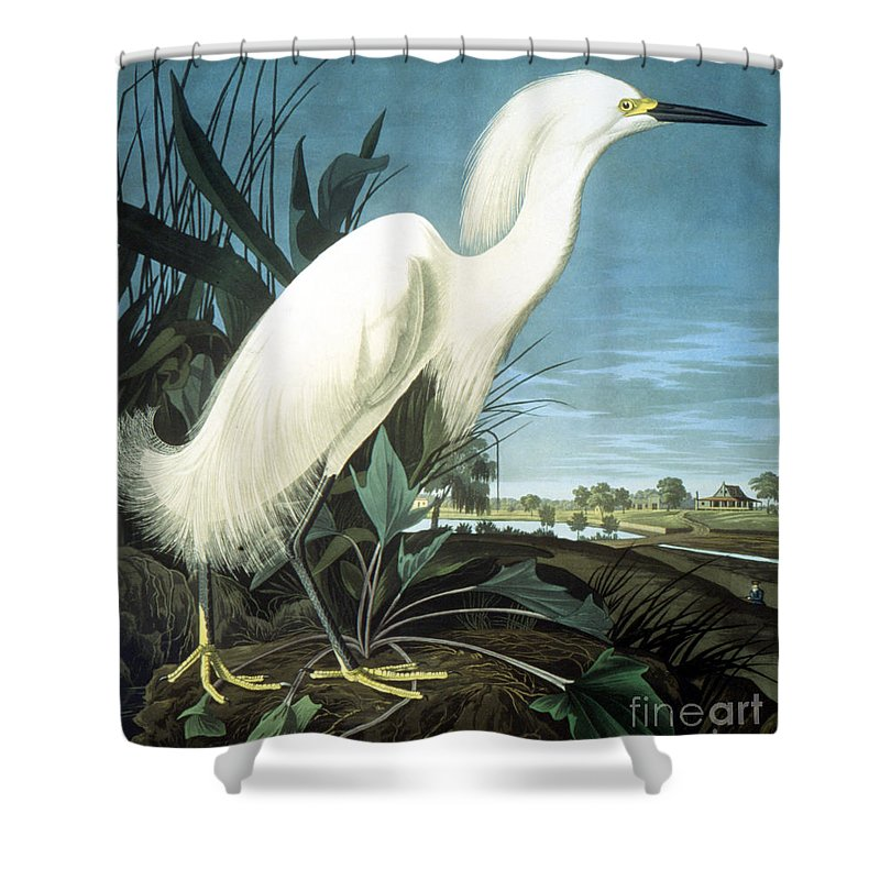 Aod Shower Curtain featuring the photograph Snowy Heron by Granger