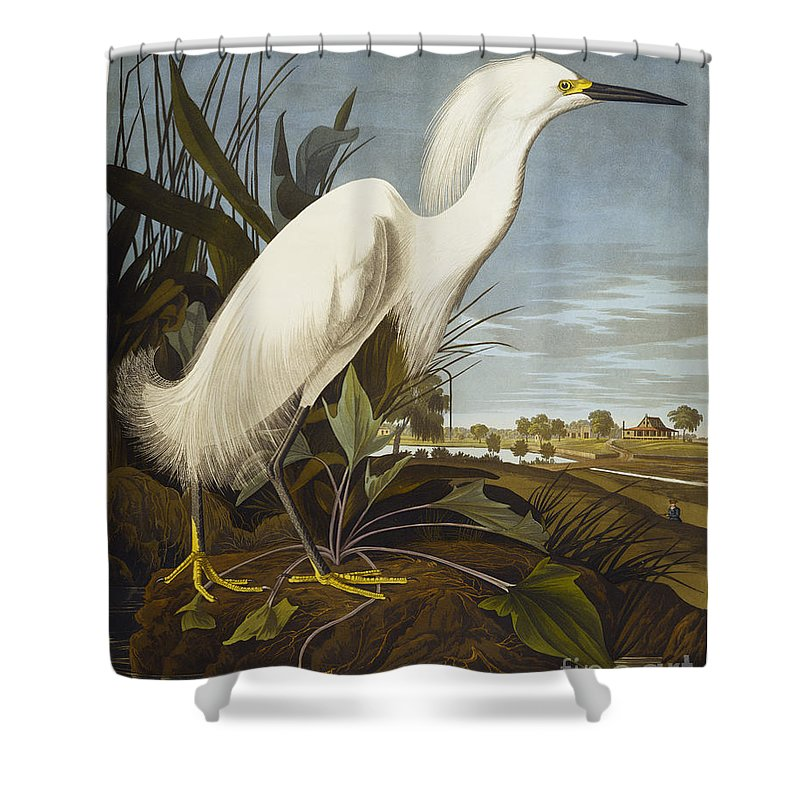Snowy Heron Or White Egret / Snowy Egret (egretta Thula) Plate Ccxlii From 'the Birds Of America' (aquatint & Engraving With Hand-colouring) By John James Audubon (1785-1851) Shower Curtain featuring the drawing Snowy Heron by John James Audubon