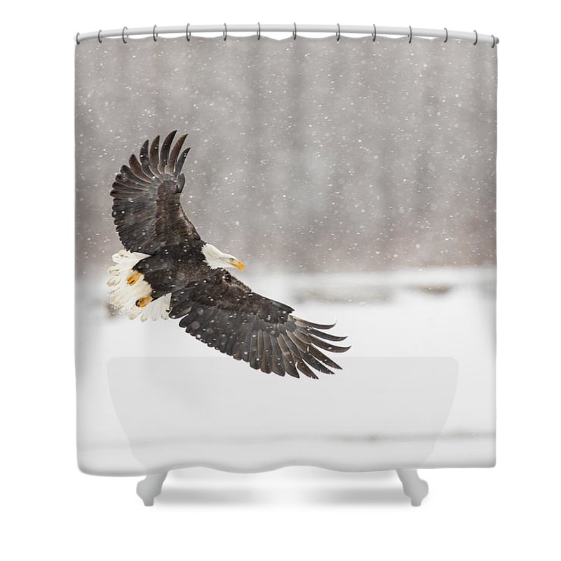Adult Shower Curtain featuring the photograph Snowy Landing by Tim Grams