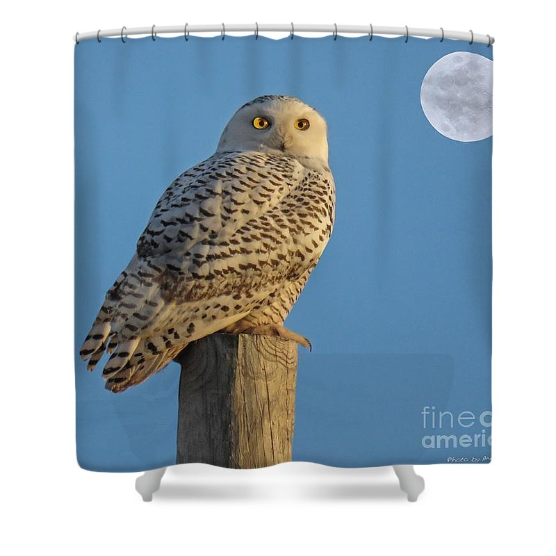 Bird Shower Curtain featuring the photograph Snowy Owl by Anthony Djordjevic