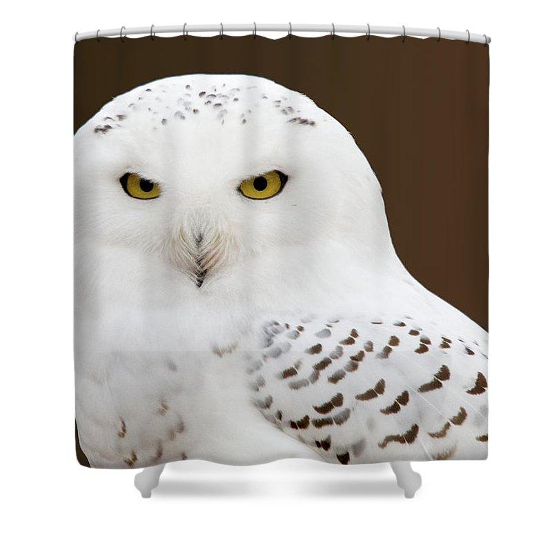 Snowy Owl Shower Curtain featuring the photograph Snowy Owl by Steve Stuller
