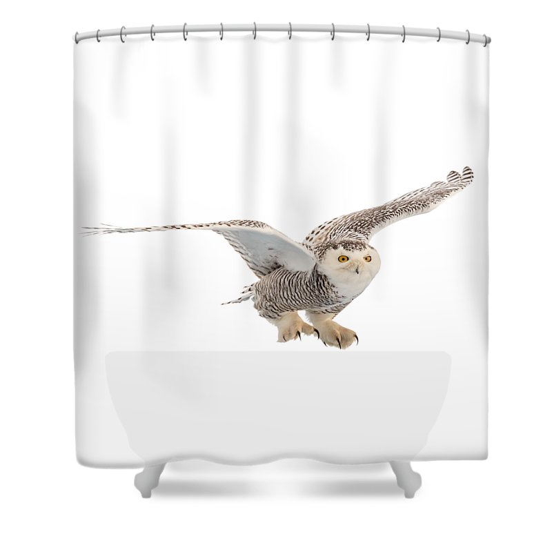 Snowy Shower Curtain featuring the photograph Snowy Owl T-shirt Mug Graphic by Everet Regal