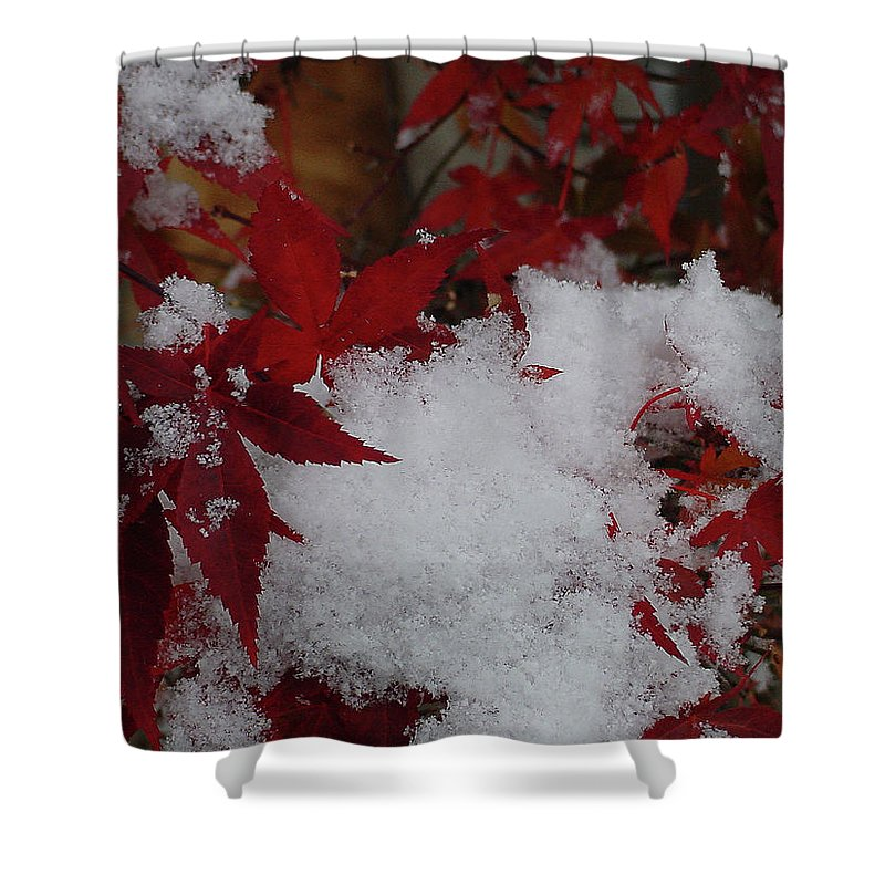 Red Shower Curtain featuring the photograph Snowy Red Maple by Shirley Heyn