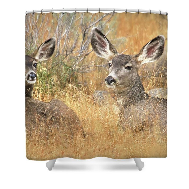 Deer Shower Curtain featuring the photograph So Much For Your Secret Place... by Donna Kennedy