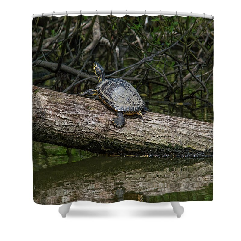 Tortoise Shower Curtain featuring the photograph Soaking Up The Rays by Stephen Jenkins