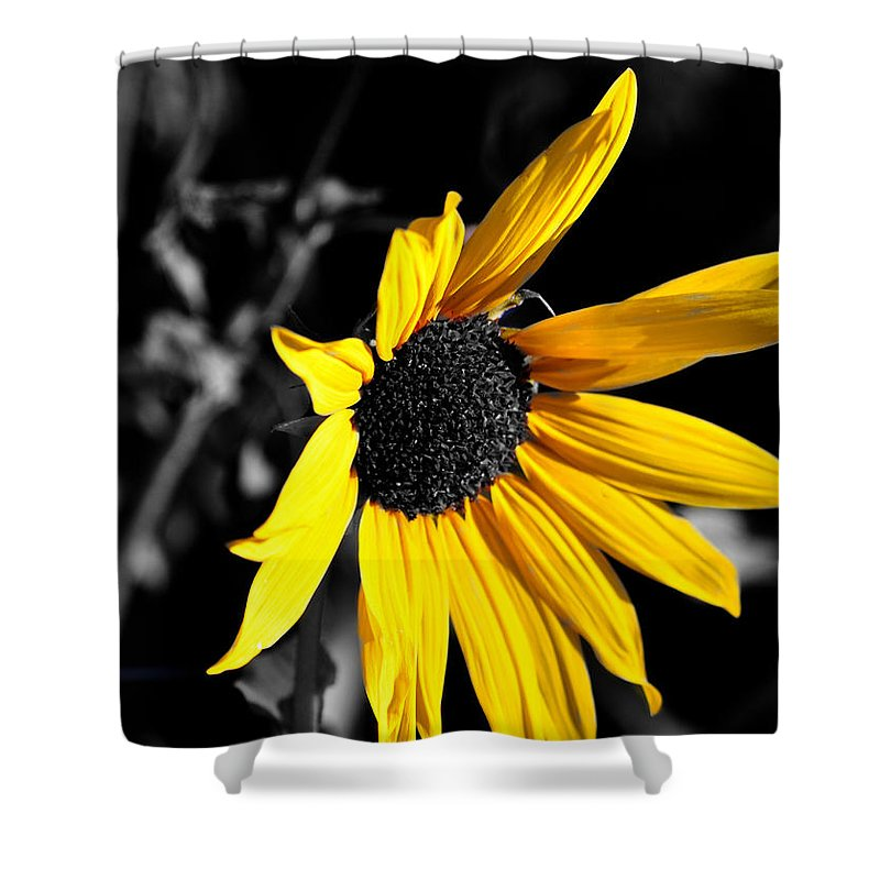 Clay Shower Curtain featuring the photograph Soaking Up The Yellow Sunshine by Clayton Bruster