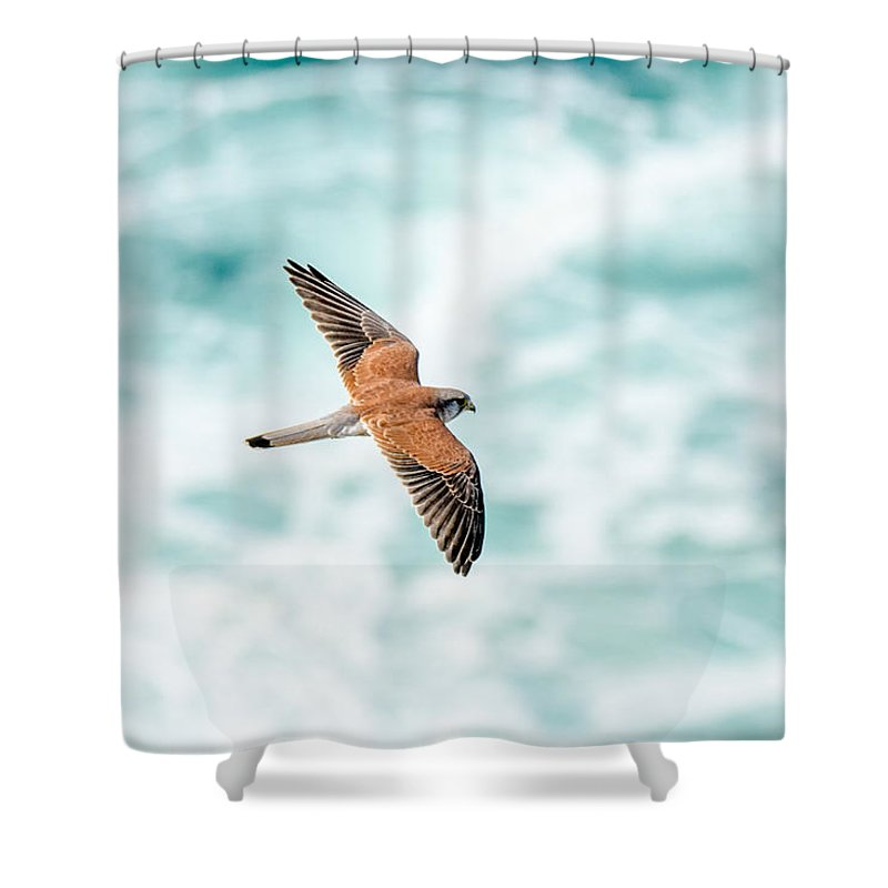 Aus Shower Curtain featuring the photograph Soaring Above The Churning Sea by Rodney Appleby
