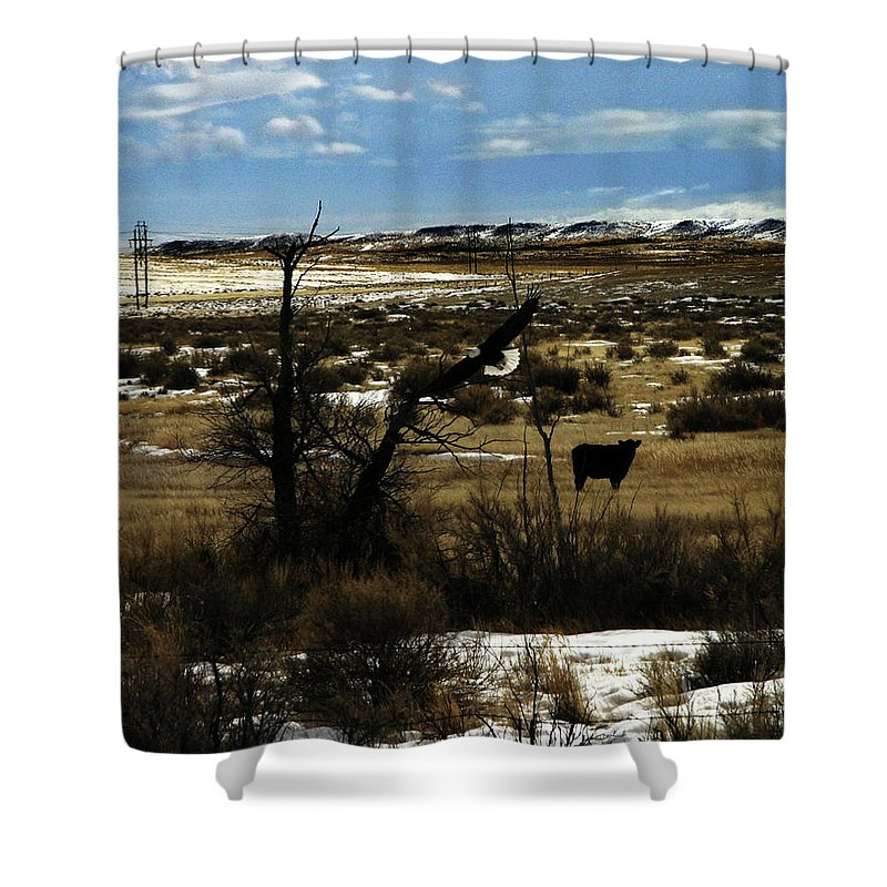 Eagle Shower Curtain featuring the photograph Soaring In Montana by Anthony Jones