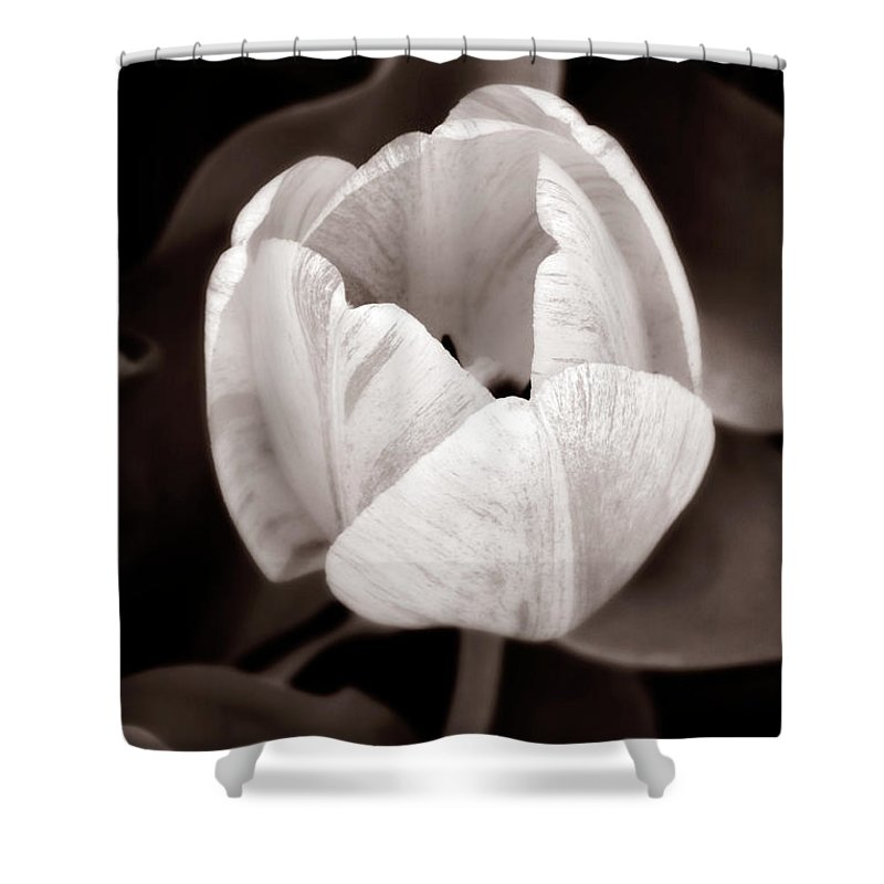 Black Shower Curtain featuring the photograph Soft And Sepia Tulip by Marilyn Hunt