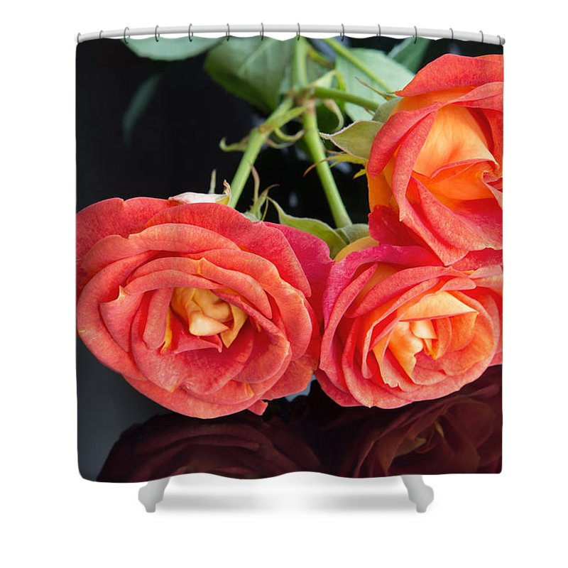 Red Rose Shower Curtain featuring the photograph Soft Full Blown Red-orange Roses On Black Background. by Svetlana Cherruty
