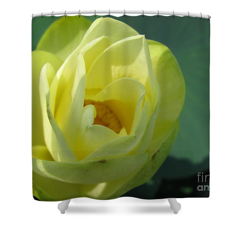 Lotus Shower Curtain featuring the photograph Softly by Amanda Barcon