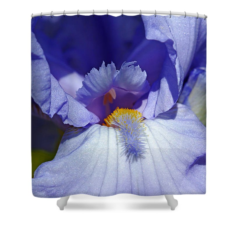 Iris Shower Curtain featuring the photograph Softly Purple by Debbie Oppermann