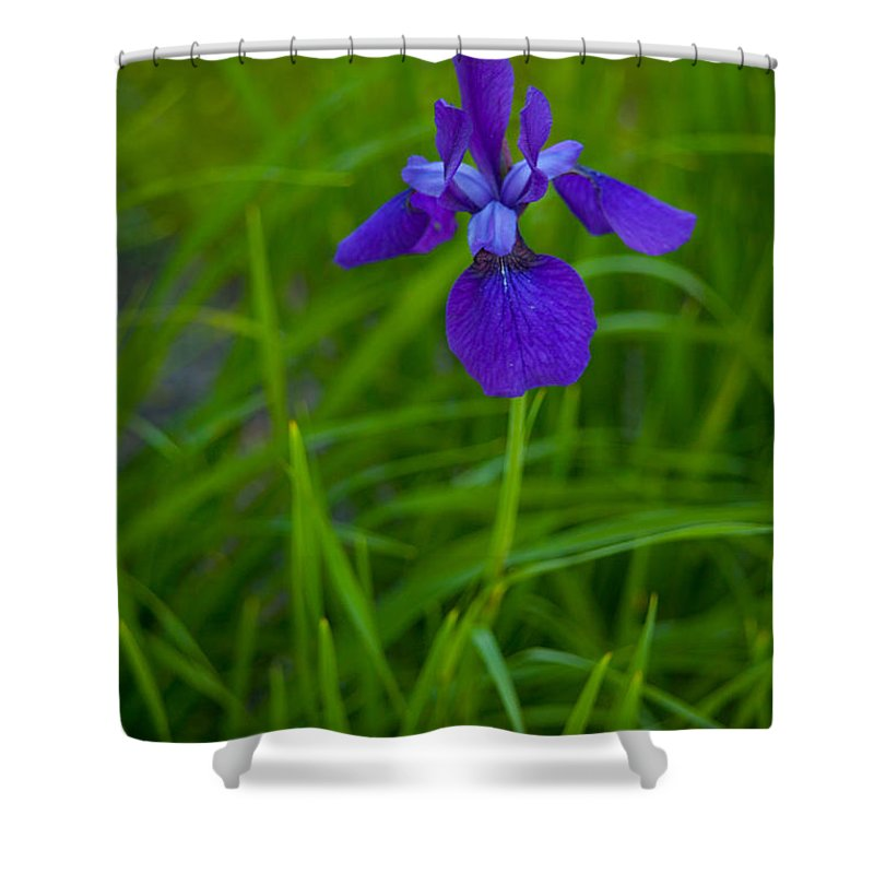 Blue Flag Shower Curtain featuring the photograph Solitary Blue Flag by Irwin Barrett