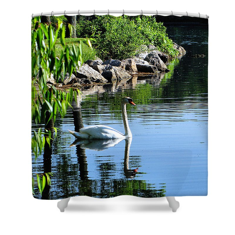 Swan Shower Curtain featuring the photograph Solitude by September Stone