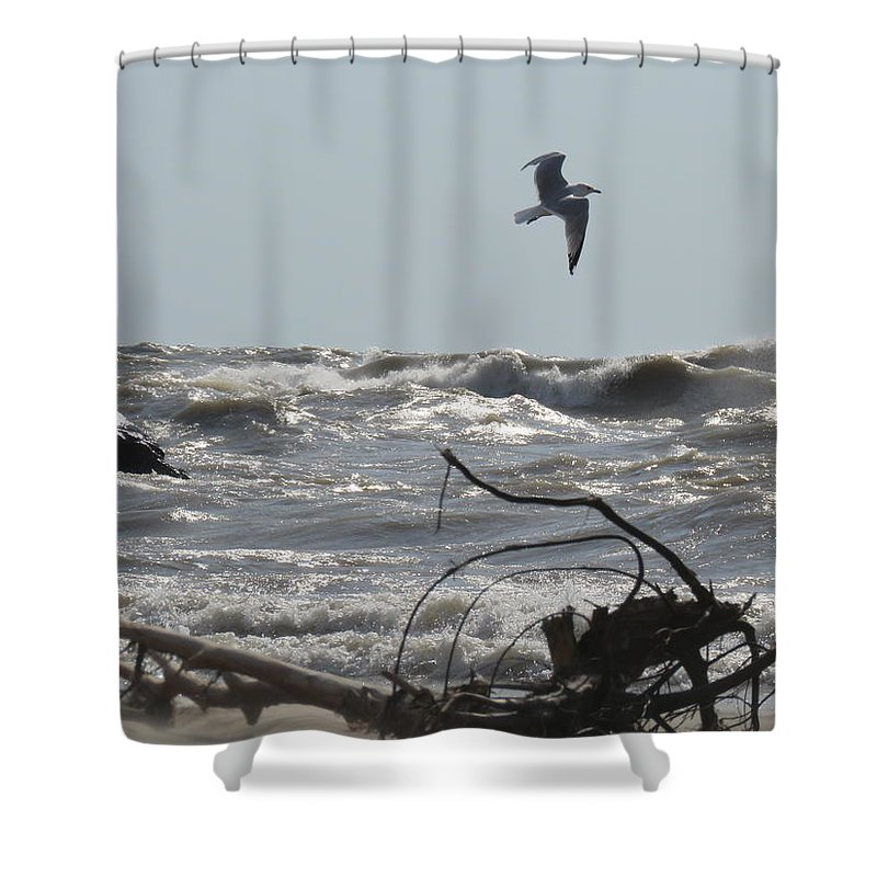 Seagull Over Lake Erie Shower Curtain featuring the photograph Solo Flight by Brenda Dowell