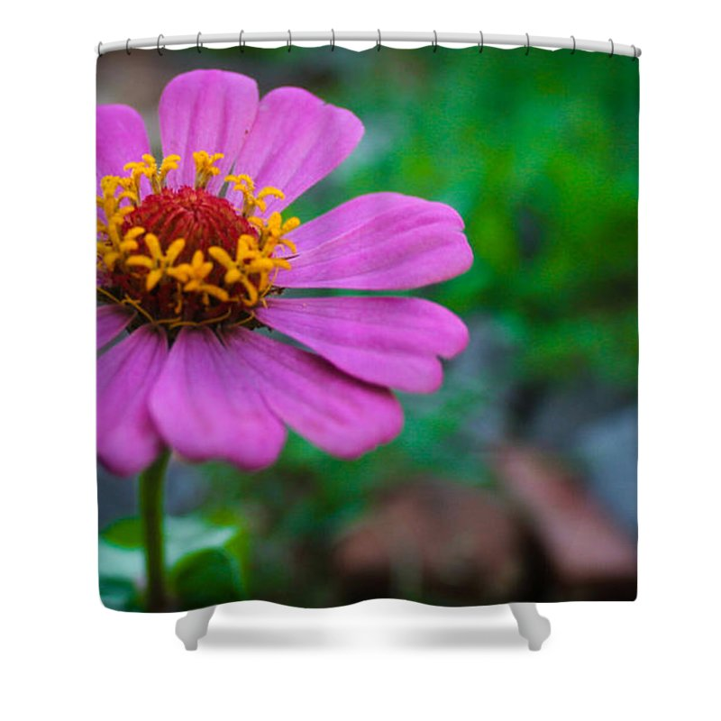 Flower Shower Curtain featuring the photograph Solo Pinkie by Kabelo Tshwaane