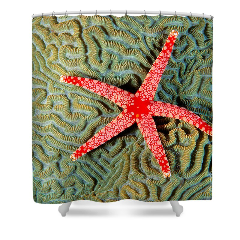 Above Shower Curtain featuring the photograph Solomon Islands, Seastar by Ed Robinson - Printscapes