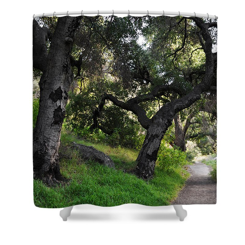 Solstice Canyon Shower Curtain featuring the photograph Solstice Canyon Live Oak Trail by Kyle Hanson