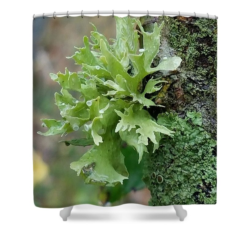 Something Green Shower Curtain featuring the photograph Something Green by Maria Urso