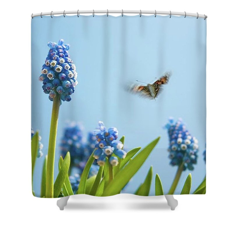 Insectsofinstagram Shower Curtain featuring the photograph Something In The Air: Peacock by John Edwards