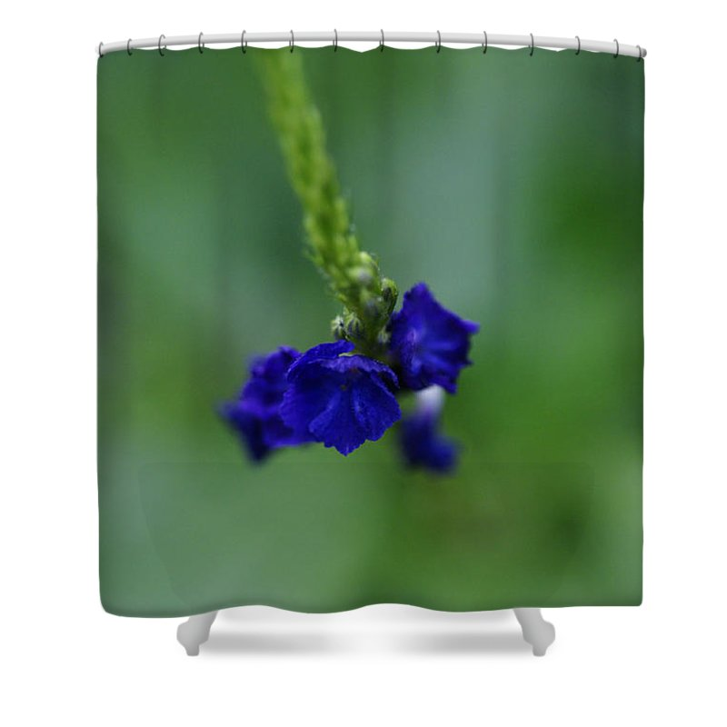 Floral Shower Curtain featuring the photograph Somewhere In This Dream by Linda Shafer