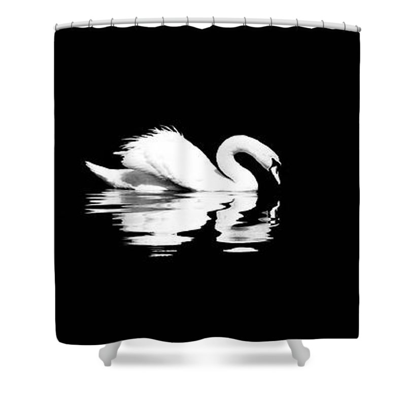 Swan Shower Curtain featuring the photograph Song Of Songs I by Deb Cohen