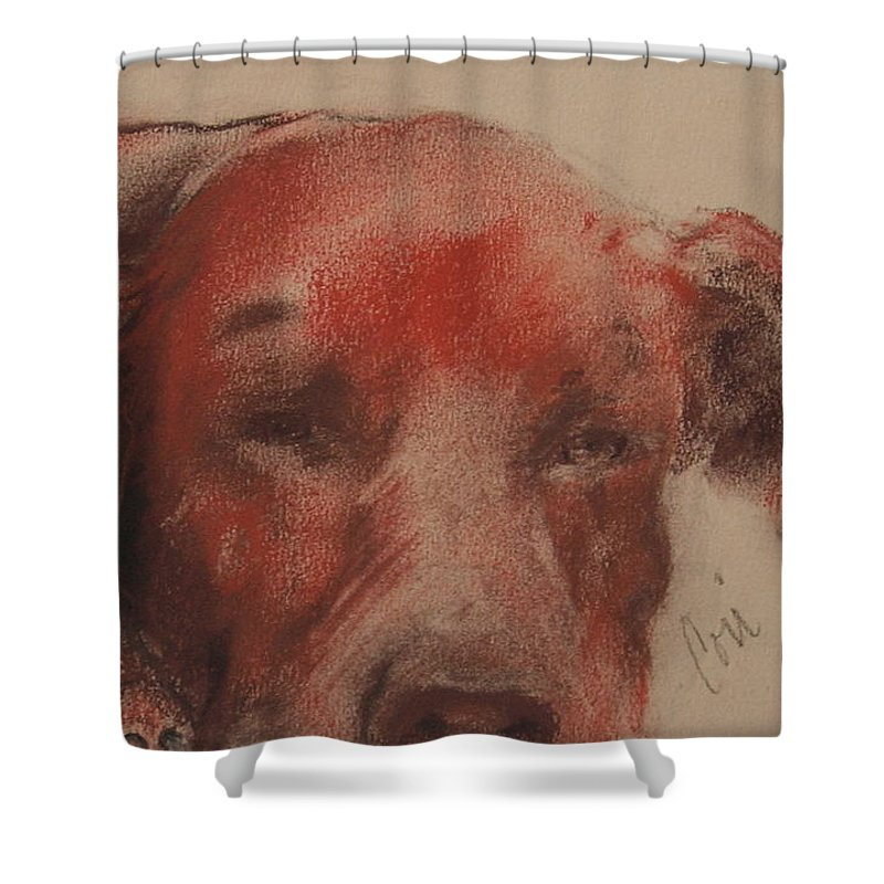 Pastel Shower Curtain featuring the drawing Soul Searcher by Cori Solomon