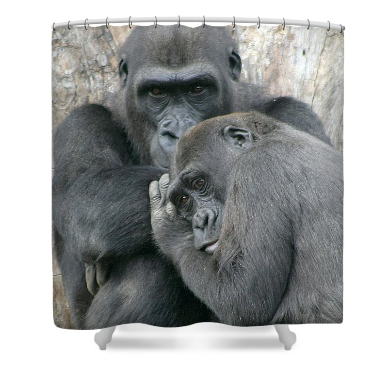 Gorilla Shower Curtain featuring the photograph Souls by Mitch Cat