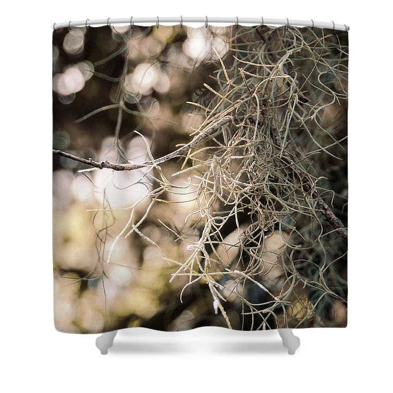 Texture Shower Curtain featuring the photograph Southern Beauty by Andrea Anderegg