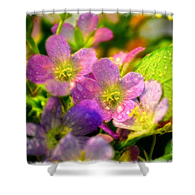 Tiny Shower Curtain featuring the photograph Southern Missouri Wildflowers 1 by Debbie Portwood