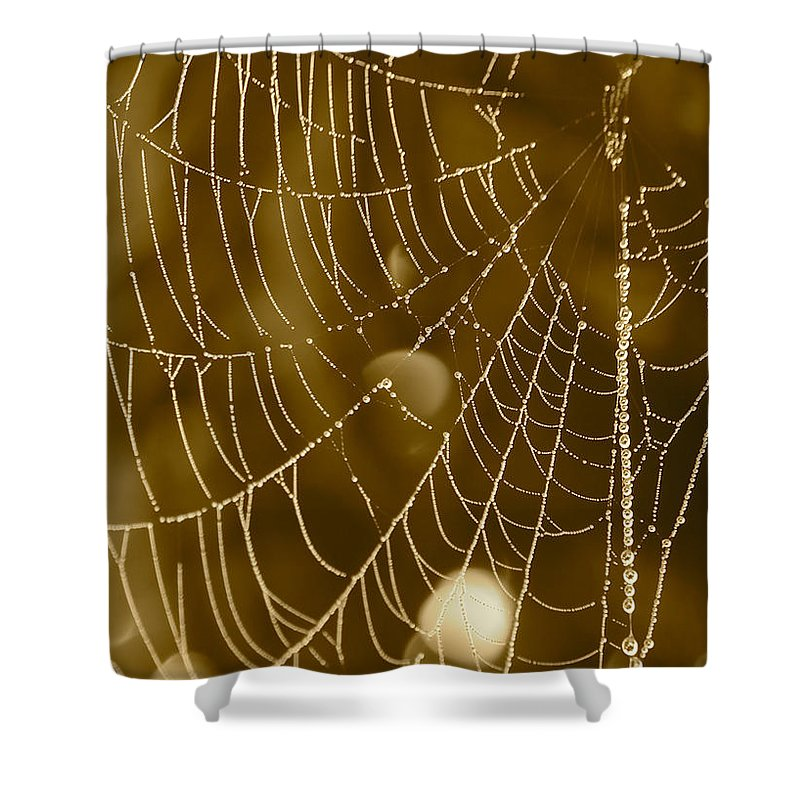 Dewdrops On Spider Web Shower Curtain featuring the photograph Southern Pearls by Carol Groenen