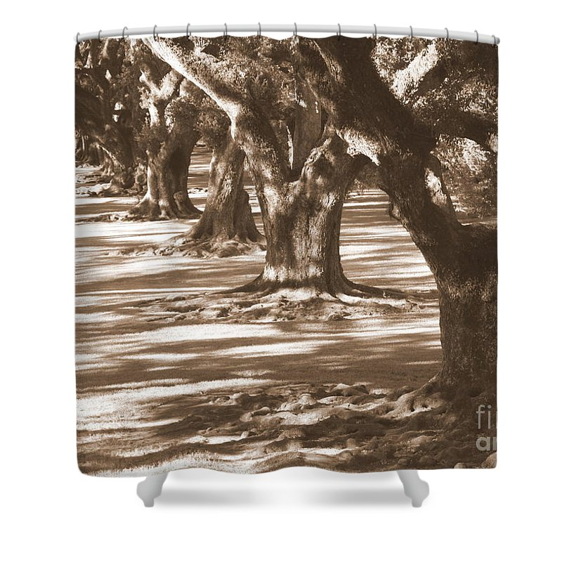 Southern Landscape Shower Curtain featuring the photograph Southern Sunlight On Live Oaks by Carol Groenen