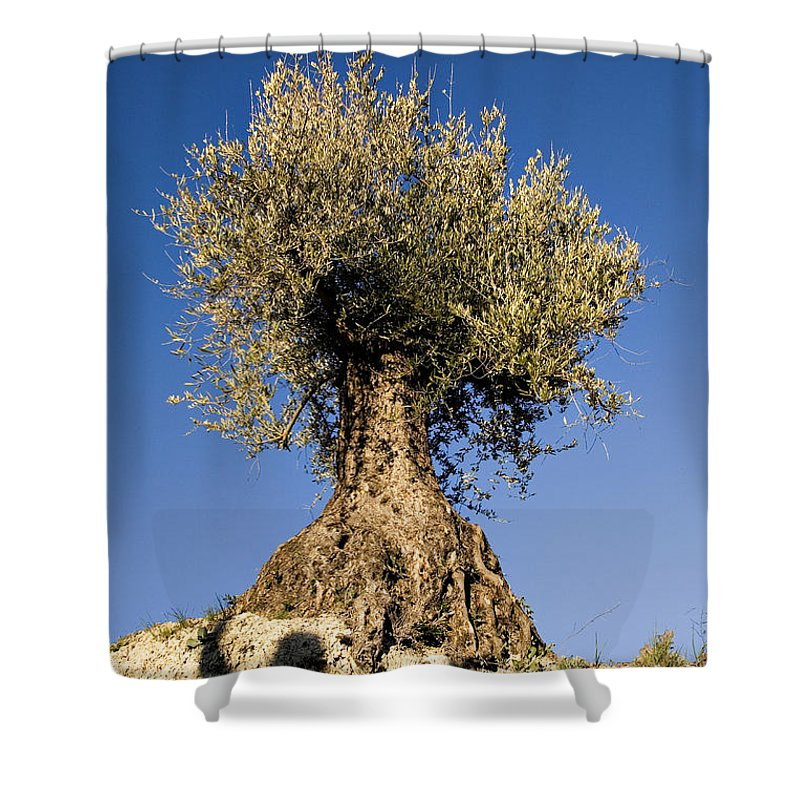 Olive Tree Shower Curtain featuring the photograph Spain by Dawn Kish