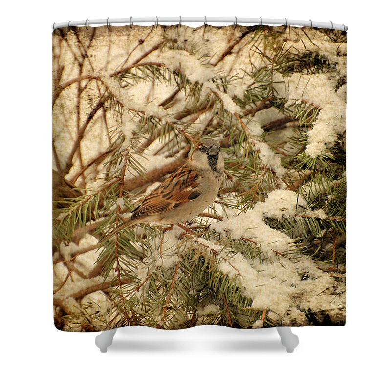 Birds Shower Curtain featuring the photograph Sparrow In Winter Iv - Textured by Angie Tirado