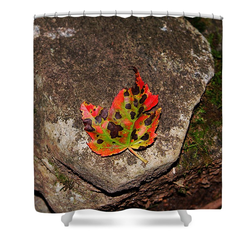 Fall Shower Curtain featuring the photograph Speckled Leaf by Christal Randolph