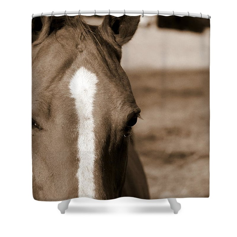 Speechless Shower Curtain featuring the photograph Speechless by Ed Smith