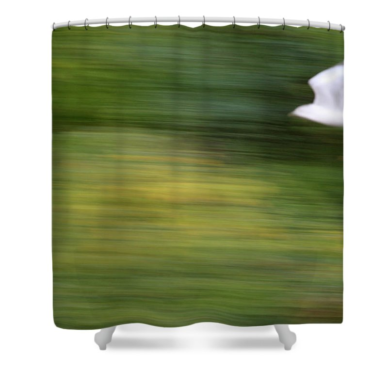 Seagull Shower Curtain featuring the photograph Speed In Flight by Karol Livote