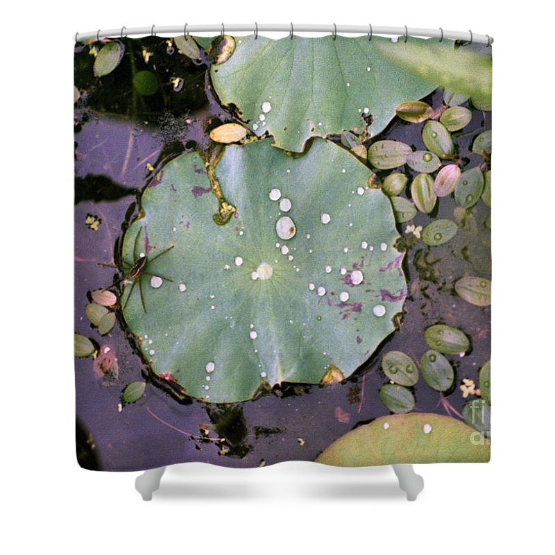 Lillypad Shower Curtain featuring the photograph Spider And Lillypad by Richard Rizzo