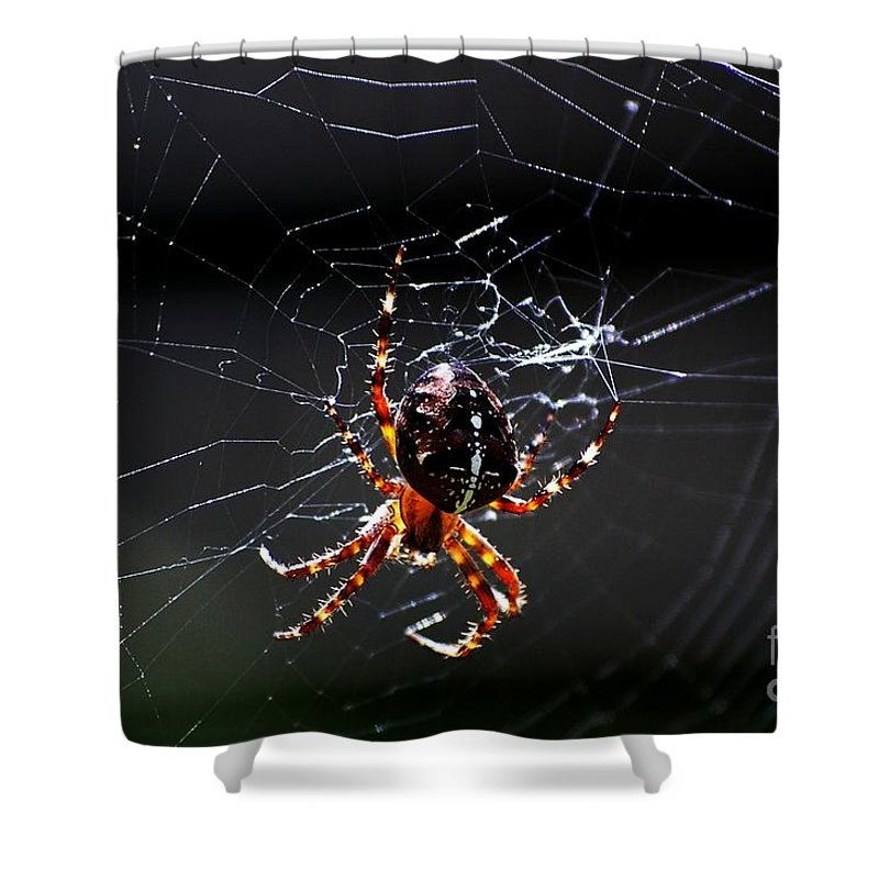 Digital Photo Shower Curtain featuring the photograph Spider by David Lane