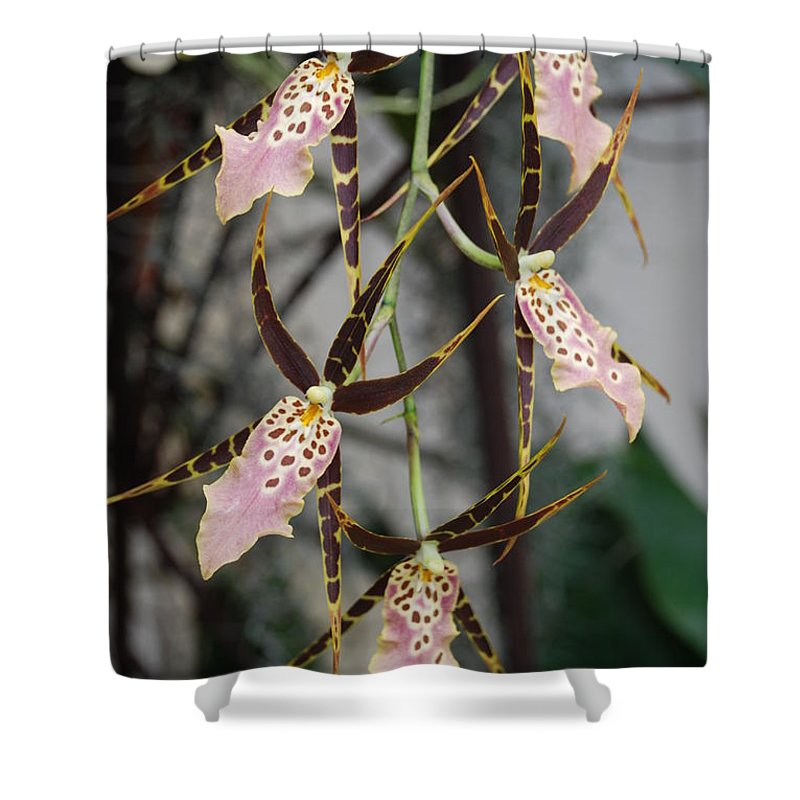 Pink Shower Curtain featuring the photograph Spider Orchids by Rob Hans