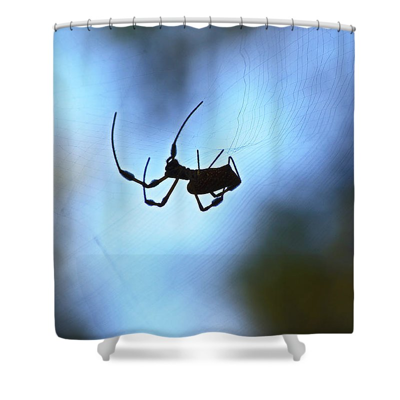 Spider Shower Curtain featuring the photograph Spider Silhouette by Kenneth Albin