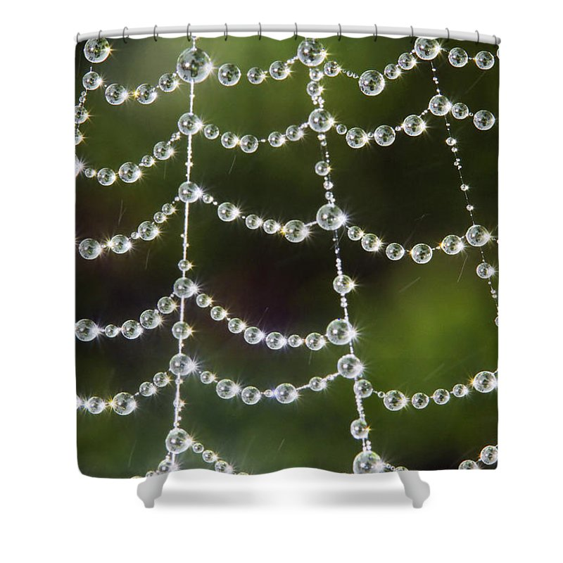 Spider Web Shower Curtain featuring the photograph Spider Web Decorated By Morning Fog by William Freebillyphotography