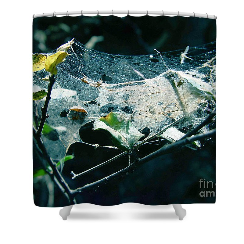 Spider Shower Curtain featuring the photograph Spider Web by Peter Piatt