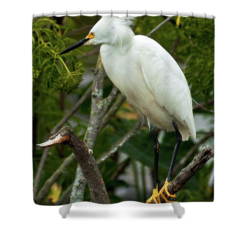 Bird Shower Curtain featuring the photograph Spiked by Christopher Holmes