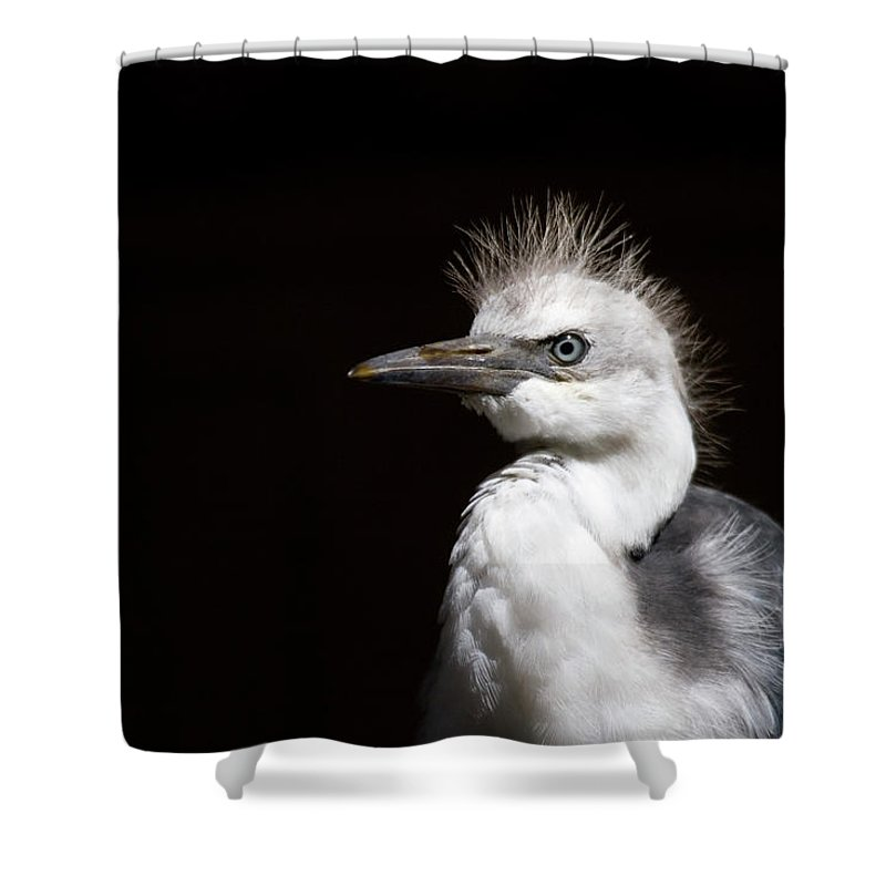 Heron Shower Curtain featuring the photograph Spiked by Mike Dawson