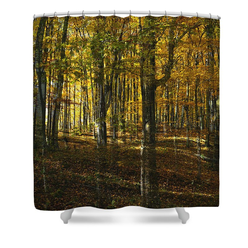 Woods Shower Curtain featuring the photograph Spirits In The Woods by Tim Nyberg