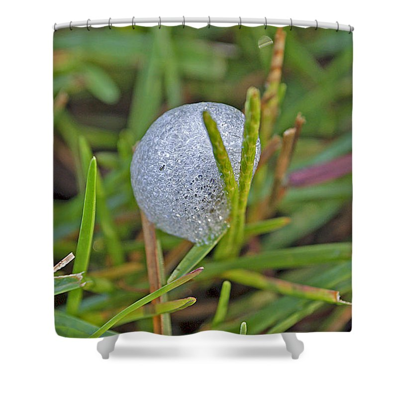 Insect Shower Curtain featuring the photograph Spittle Bug Case by Kenneth Albin