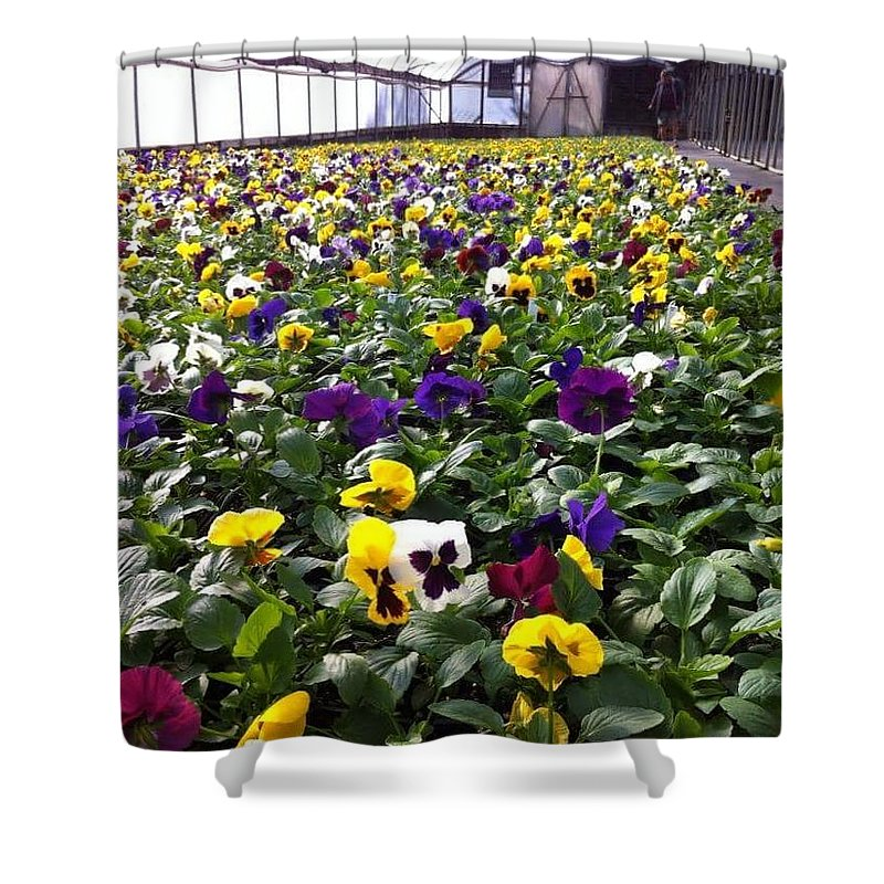 Flowers Shower Curtain featuring the photograph Splashes Of Color by Cindy Riley