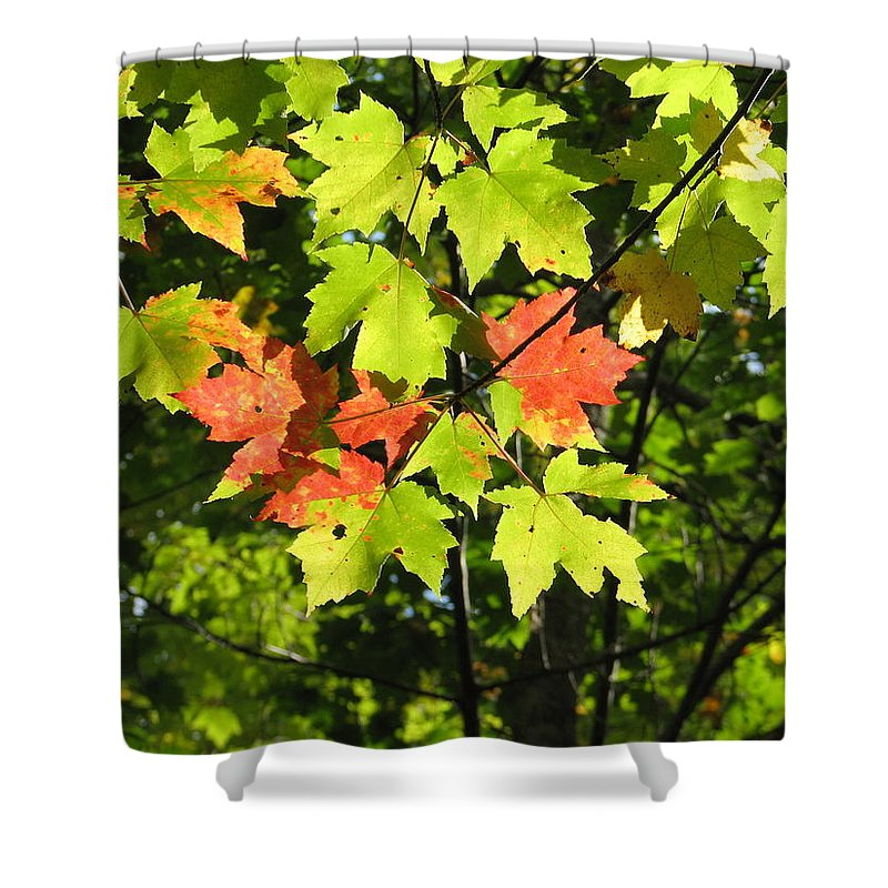 Fall Shower Curtain featuring the photograph Splattered Paint by Kelly Mezzapelle